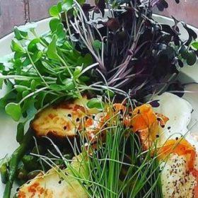 Saláta és Mikrozöld magok, ültetőcsomagok